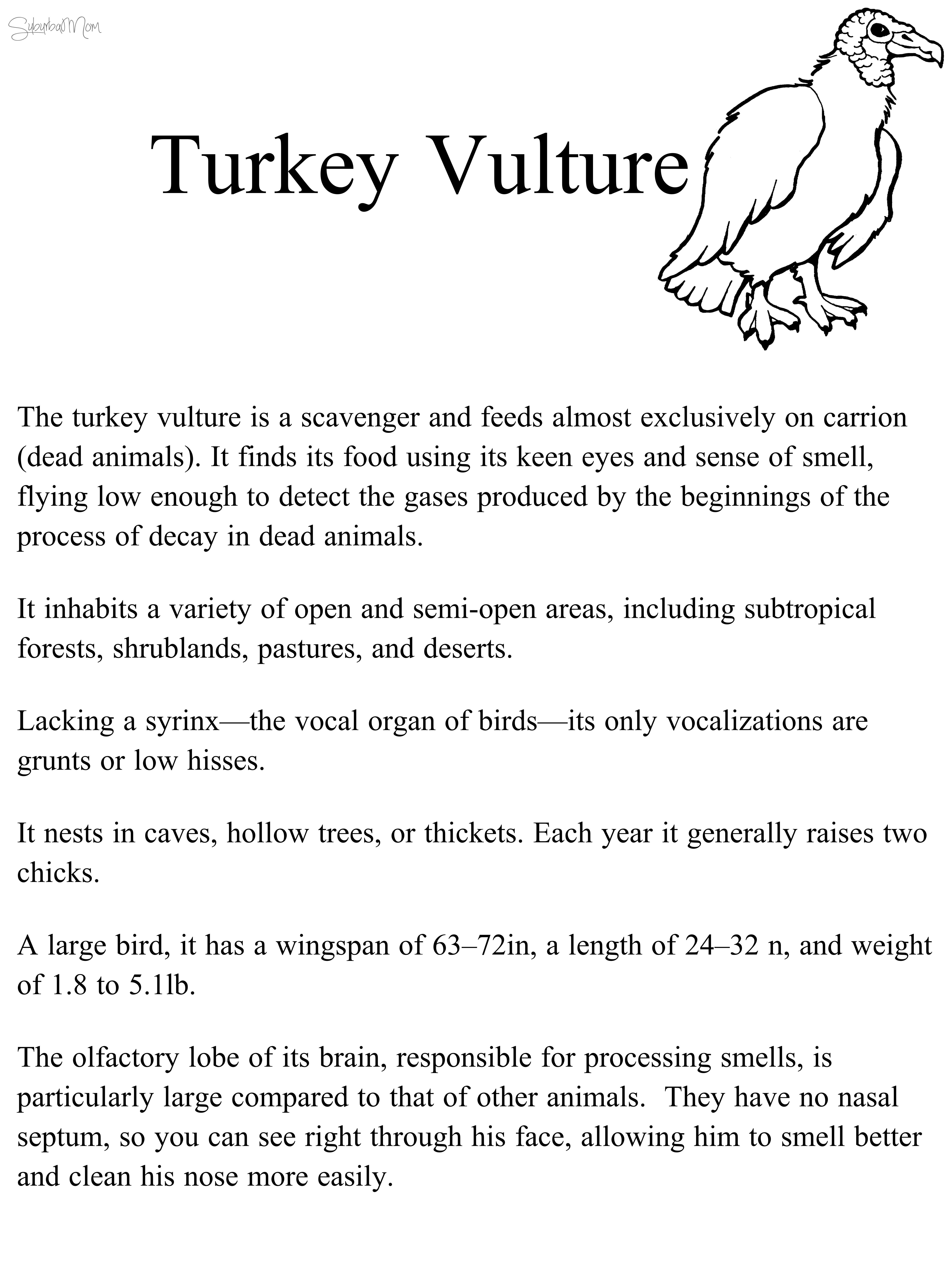 TurkeyVultureInfo_c
