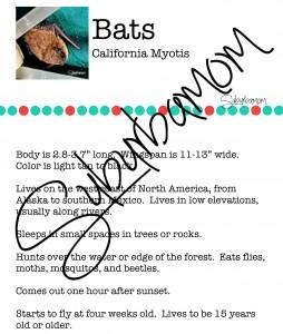 Microsoft Word - California Myotis Info.docx