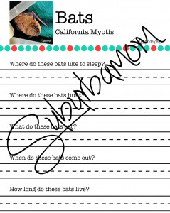 Microsoft Word - California Myotis Worksheet.docx