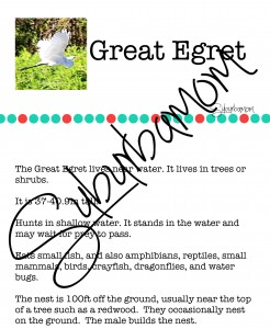 Microsoft Word - Great Egret Info.docx