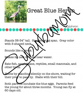 Microsoft Word - Great Blue Heron Info.docx